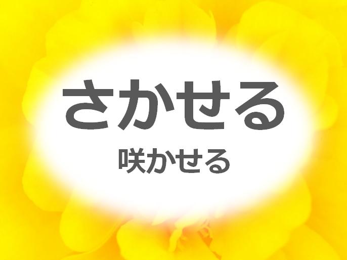 HP_TOP2